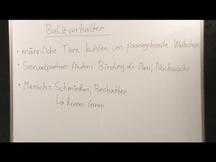 Lernvideo, Nachhilfevideo - Balzverhalten