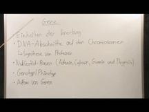 Genbank biologie